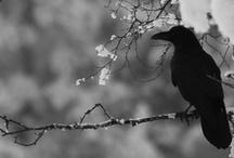 Ravens<3 / by Lauren Smith