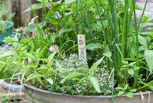 herb gardenihg
