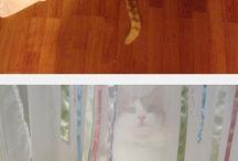 Gatos, Gatos y más Gatos