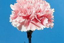 Portfolio Bloemwerk klas 4 / Foto's van mijn bloemstukken.