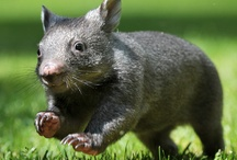 Australia cuteness