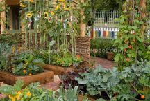 Vegetable gardens  / by Maija Tervite Gūte
