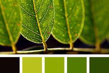 My color palettes