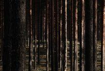 earth :: woods