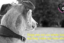 Quotes hond / These quotes are posted on my Facebook page each Sunday