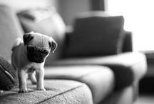 just cute / by Stephanie Asa