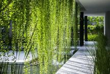 Living dividers gardens