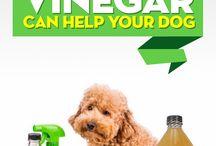 Apple Cider Vinegar for Dogs: 25 Proven Benefits / Apple Cider Vinegar for Dogs: 25 Proven Benefits
