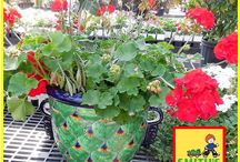 Mother's Day Gifts from Smith's Gardentown