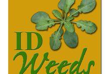 Gardening Pest & Disease