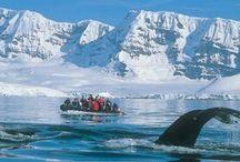 ~ Travel & Tours | Antarctica ~ / Travel in Antarctica | Tours In Antarctica / by Kari Vest