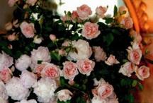 Flowers Flowers Beautiful Flowers