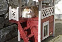 Cats/Kisut