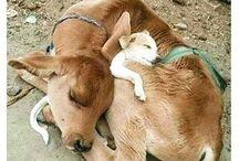 》why i'm vegan