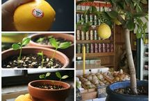 plants / by Deborah Mangold- Phelps
