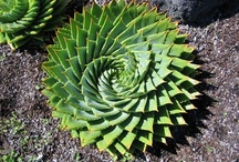 succulents / by Connie Giangrosso