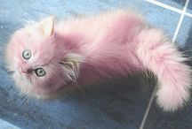 Pink cat! / by 😸