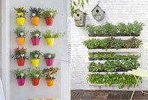 Jardinagem / Horta