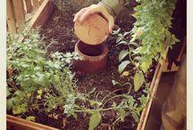 Garden Drought Tolerant