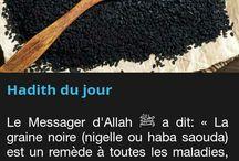 Islam & co - Oumma