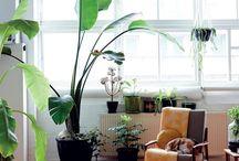 home decor / plant