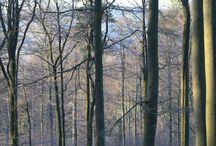 Der Odenwald. / Es ist wirklich ein wunderbares Stückchen Natur wo ich wohnen darf momentan.