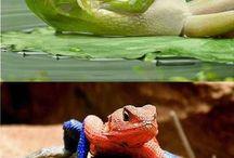 animals fun