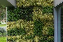 zielone walle