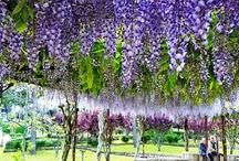 цветение, самые красивые фото инета