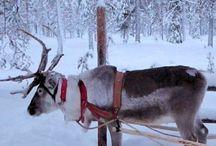 Lapland!