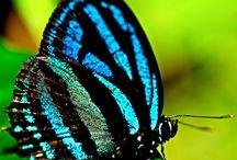 Joy: Butterflies / Essential ingredient of any vintage garden