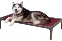 Alaskan Husky / Celebrating Alaskan huskies / by Kuranda Dog Beds