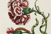 books: fine old illustrations