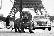 Paris #petfriendly