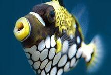 scuba diving discoveries