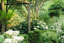 Planten / Verzorging