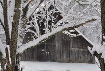 Winter Wonderland / by Misty Boggs