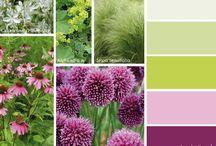 zahrada - barvy