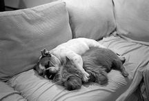 Diggity Dogs / dogs, pups, puppy, puppies, canines / by Spilltojill