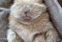 baby konijntjes