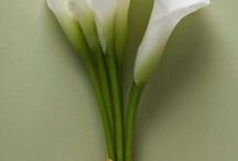 Flowers / by Carla Demelas