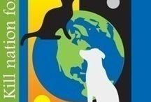 Animal Welfare / by Debbie Crysler