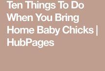 Chicken journal