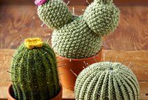 cactus / by Marisa Bentivoglio