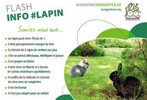 Fiches Web Association Marguerite & Cie / Fiches d'information sur le lapin de compagnie