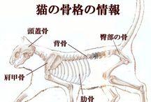 anatomy animal