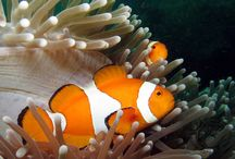 Scuba Diving at Padang Bai with Manta Manta Diving, Bali.