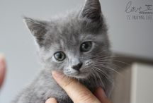 Cⓐtⓢ AND CHARTREUX / Ma petite chatte INⓐ / by Veronique Delporte-Anseaume