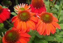 outdoor native plants