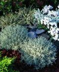 garden - rastlinky